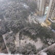 上海も雪模様