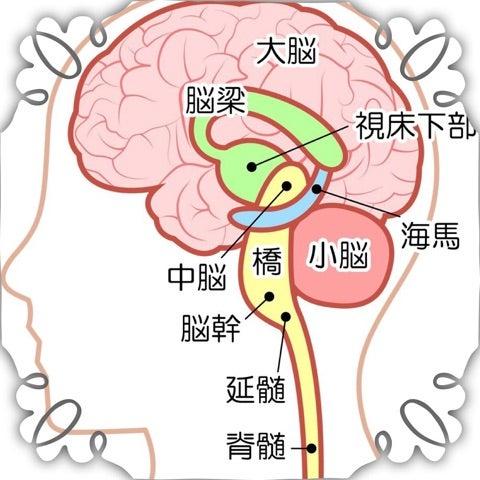 出血 脳幹