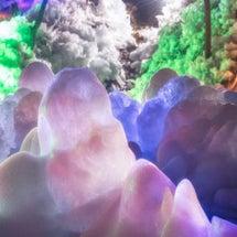 埼玉へ氷柱を見に行っ…