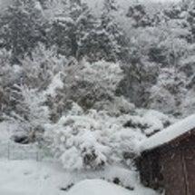 まだ降り続く雪(^_…