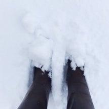 パグは雪を喜ぶか?