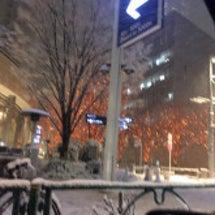 寒波で雪にはまりまし…