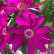 新松戸の花たち