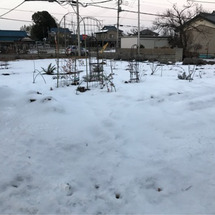 土壌の微生物が雪を溶…