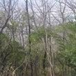 屋島から高松の街を見…