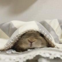 おはぎちゃん、冬眠し…