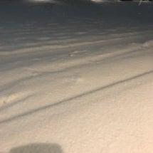 先日の雪の話&2月ス…