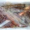 31日の釣果の画像