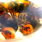 クロスズメバチの焼酎酒&和バチのハチミツで最強パワーの記事より