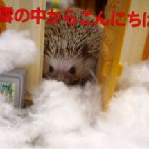 雪の中の喫茶斎藤ハリ