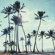 カラフルなハワイ