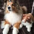 ゆかいなワンコと犬の…