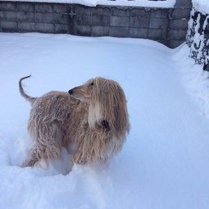 雪に大はしゃぎの画像