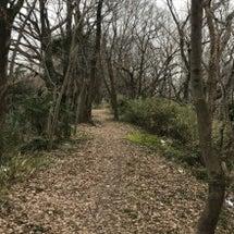 寒中の木の芽