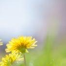 子どもと遊びつつ、春の訪れを感じる日の記事より