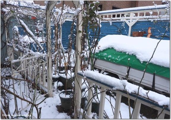 バラ庭 冬作業