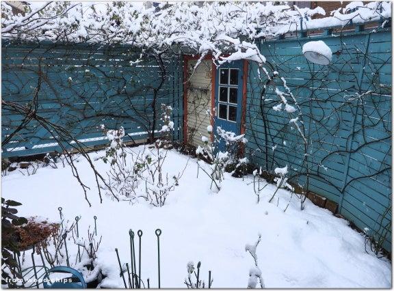 薔薇の庭 冬
