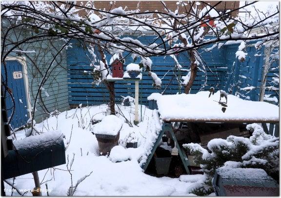 バラの冬作業