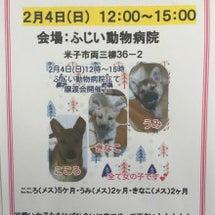 ☆犬の譲渡会☆
