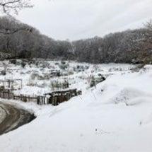 雪〜!一音禅