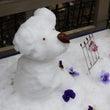 プードル雪だるま/わ…