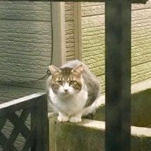 自宅に来るさくら猫た…
