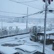 雪雪とジャスミン避妊…