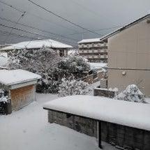 雪かきしましたぞぉお…