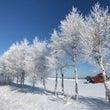 樹氷    #田舎暮…