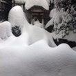 立春寒波  雪がどこ…