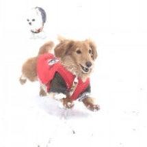 福岡で雪!犬の幼稚園…