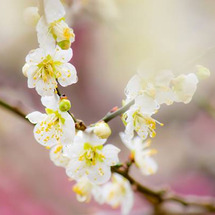 花粉症・食物アレルギ…