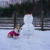 雪だいすきの画像