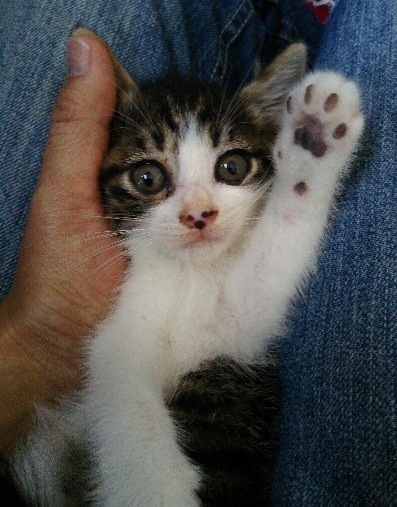 子猫ちゃんのシュシュ用の鈴、入荷しました♪