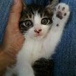 子猫ちゃんのシュシュ…
