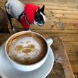 BONDI COFF…