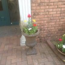 お花を植えました。