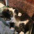 沖縄の猫、チャーより…