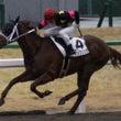 【レース写真】京都競…