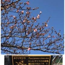 温泉*桜*おひなさま