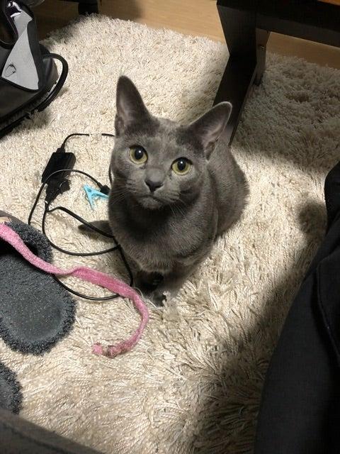 関西 弁 で 喋る 猫