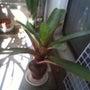 成長した植物