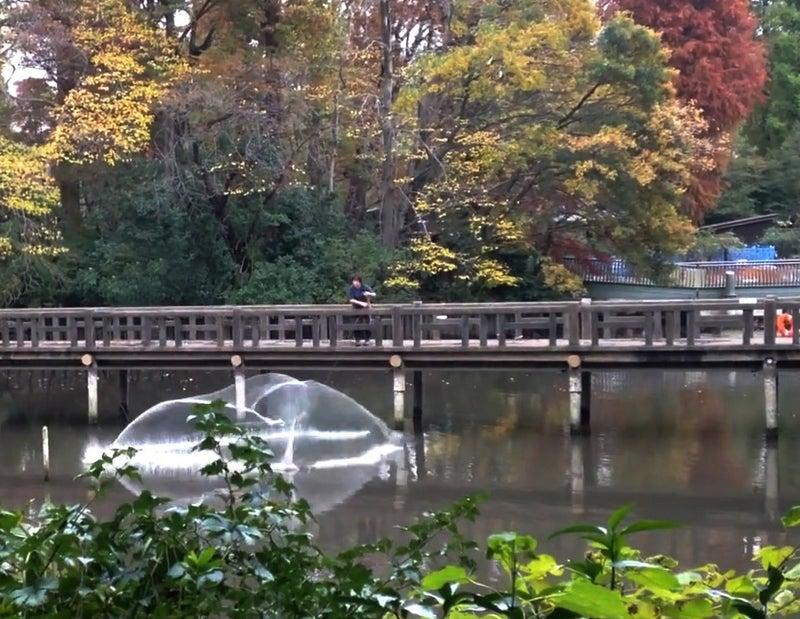 公園 バラバラ 井の頭
