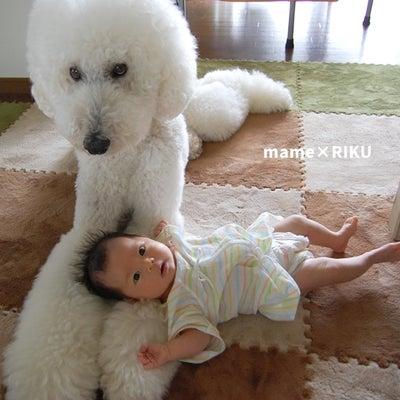 赤ちゃんとわんこの生活の記事に添付されている画像