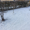 昨日の朝も雪!の画像