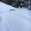 やっと雪が溶けたと思…