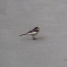 悪天候に小鳥