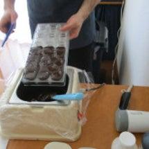 久々にチョコレートレ…