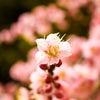 枝から花が咲いた日の画像