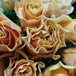 今月のバラ